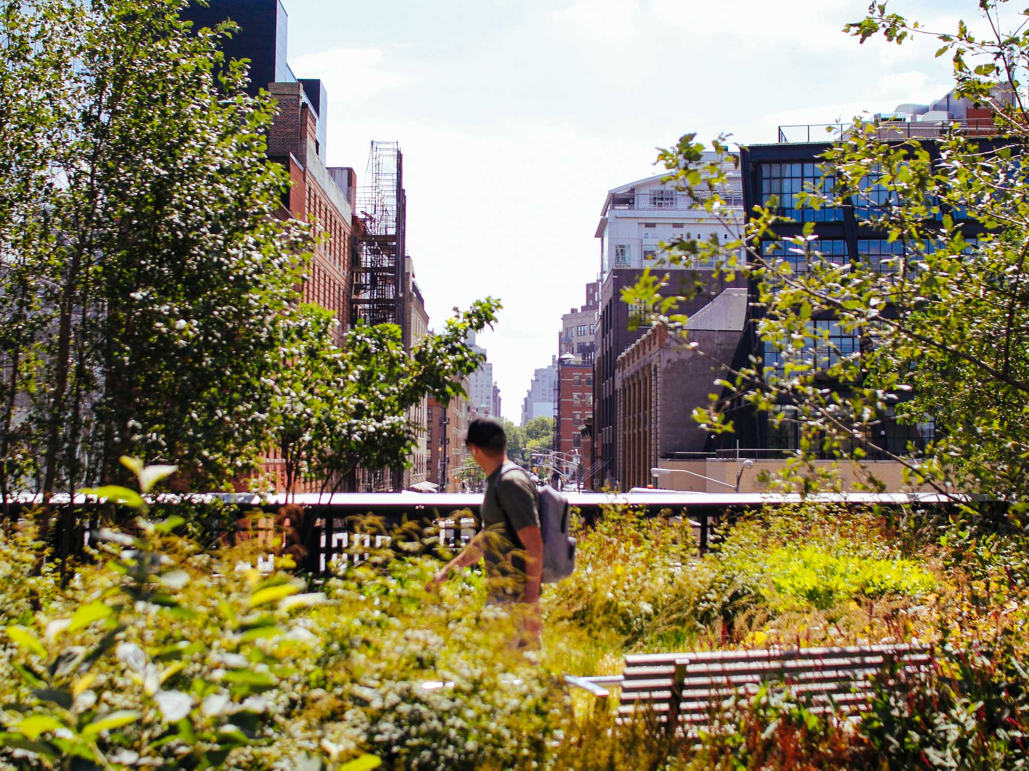 On the High Line looking down a Manhattan street