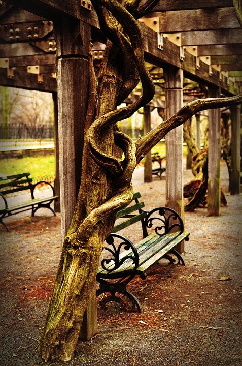 A pergola at the Central Park Conservatory Garden