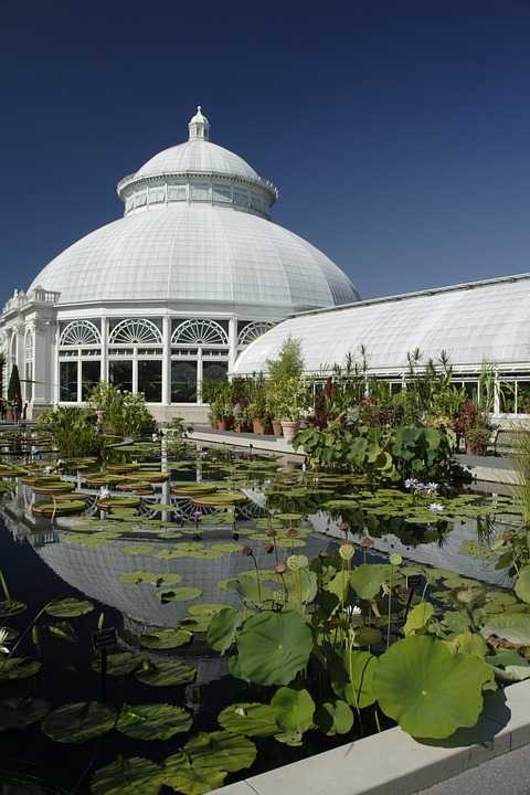 Pond with lilly pads and dome shaped white building