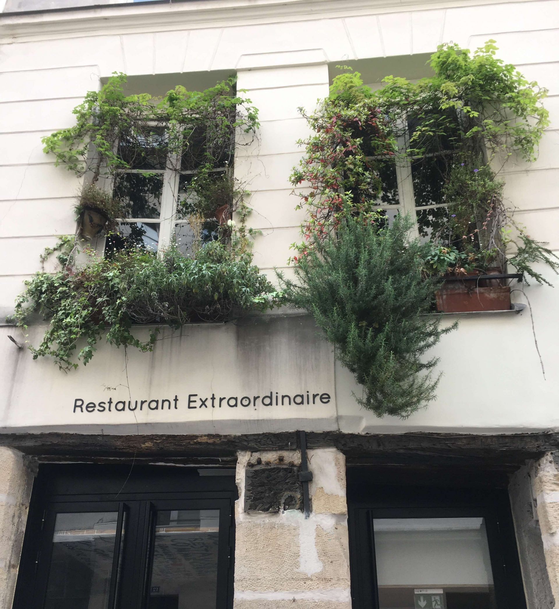 Plants, flowers and vines growing in window boxes on a Parisian apartment