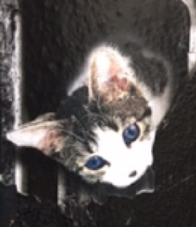 Painting of a kitten looking down through a wall