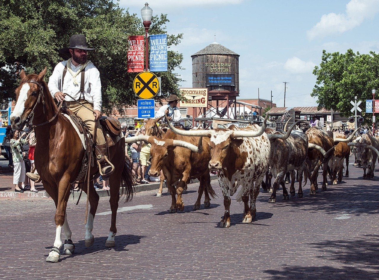 Cattle at Fort Worth Stockyards