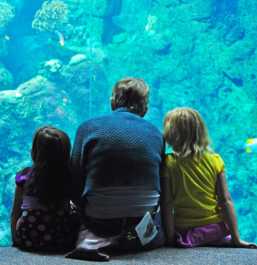 Aquarium inside the California Academy of Sciences