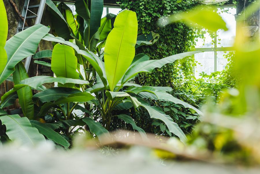 Indoor rainforest exhibit