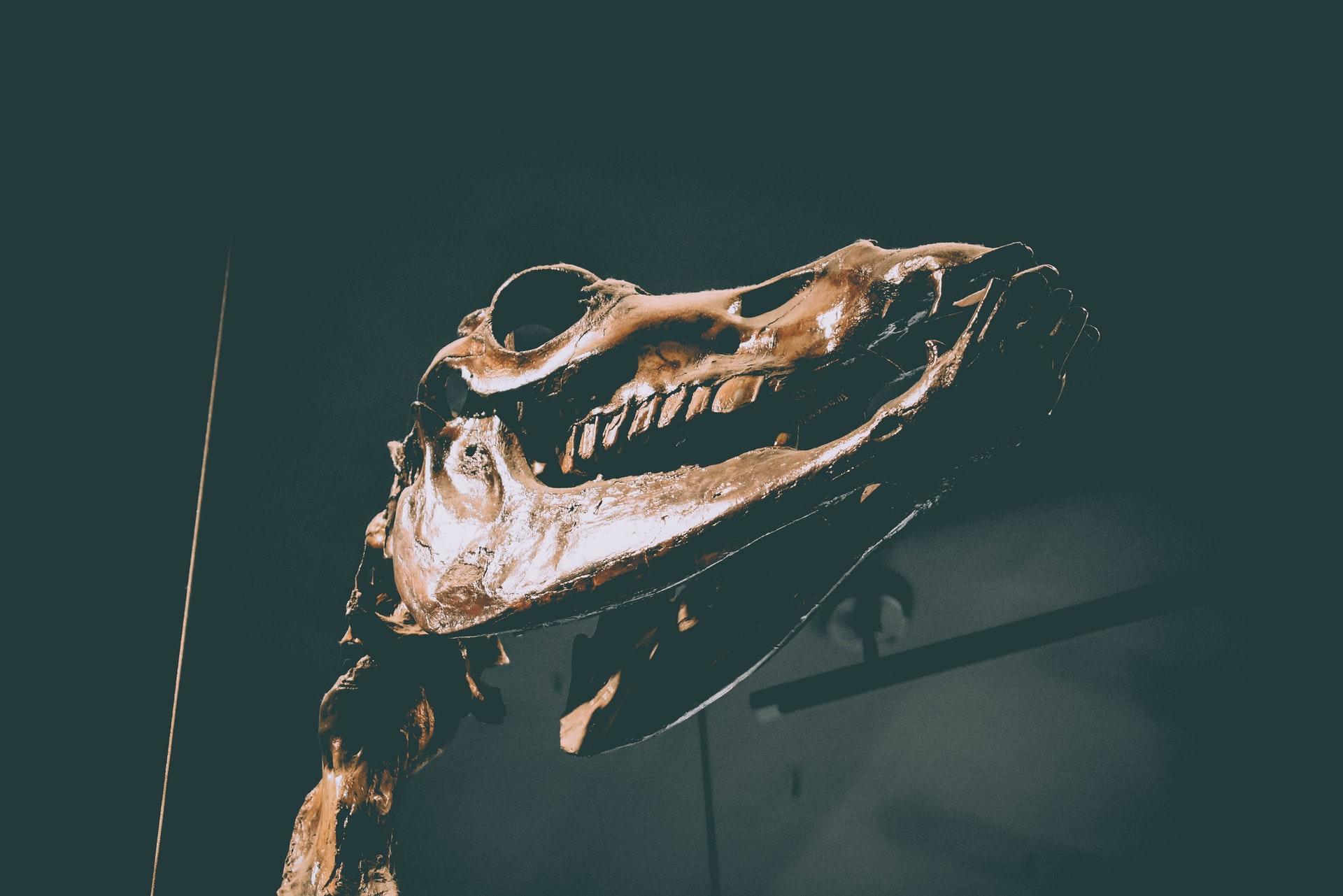 Skull on display at the La Brea Tar Pits
