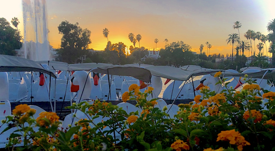 Echo Park Lake in LA at Sunset with Boats and Flowers in Foreground