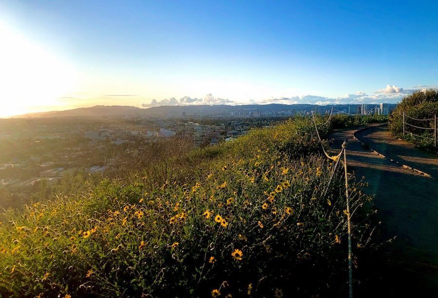 Baldwin Hills Scenic Overlook sunset with flowers in the foreground