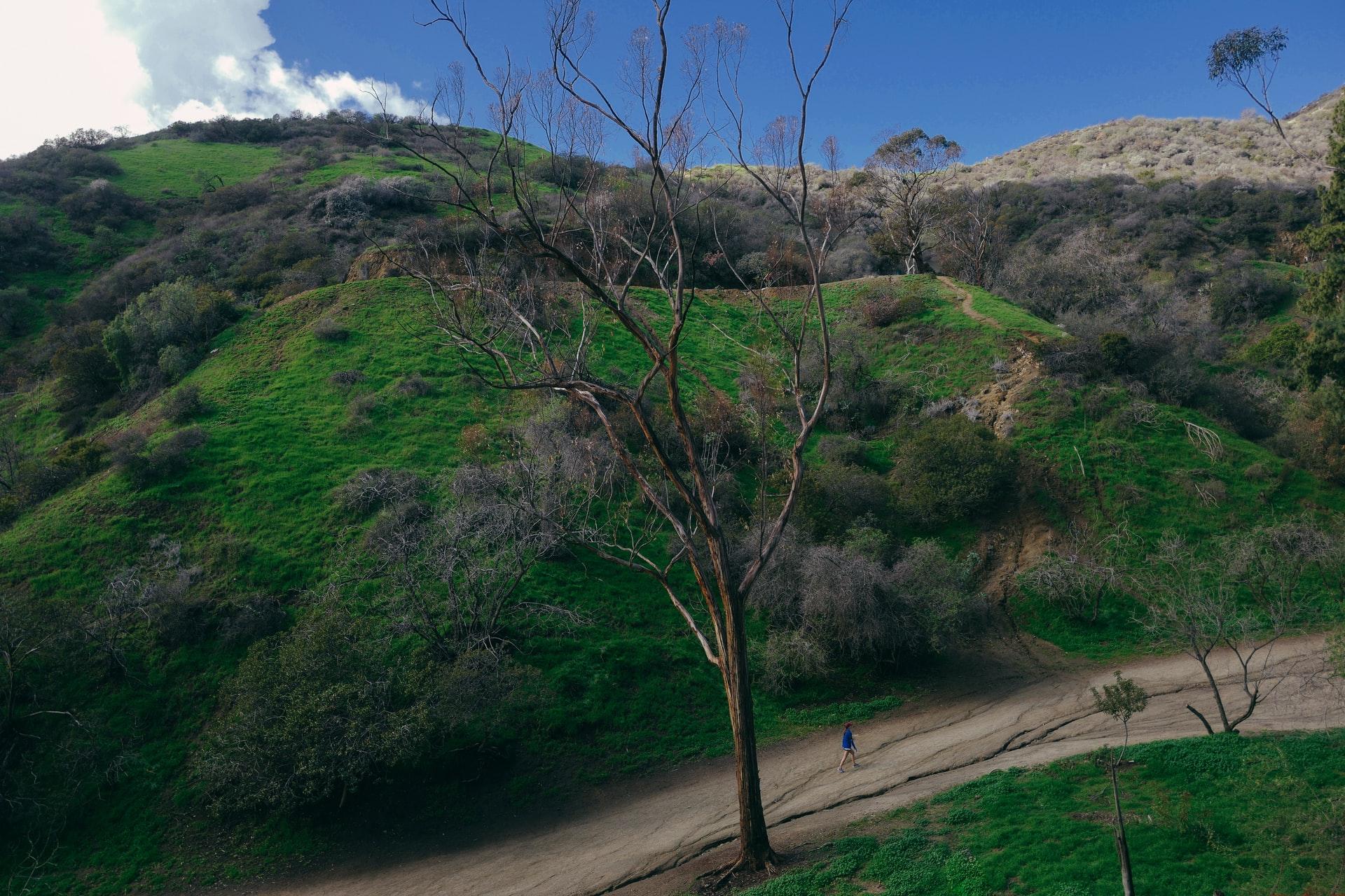 Runyon Canyon Park hiking trail in LA