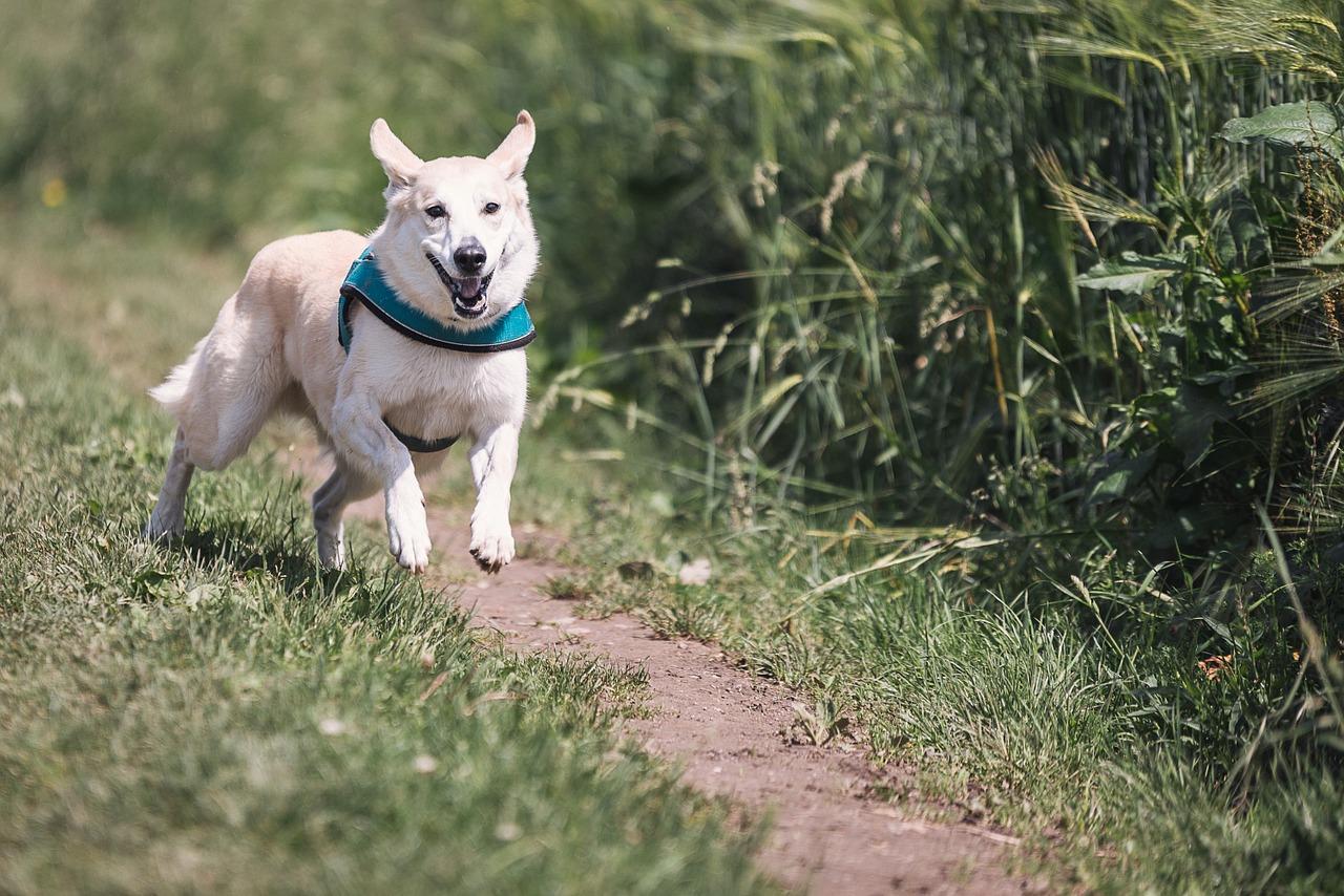 dog running at the park