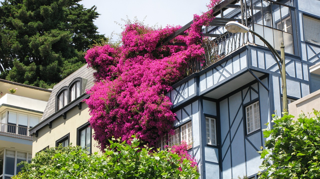 Flowers spilling over the walls of a house on Lombard Street