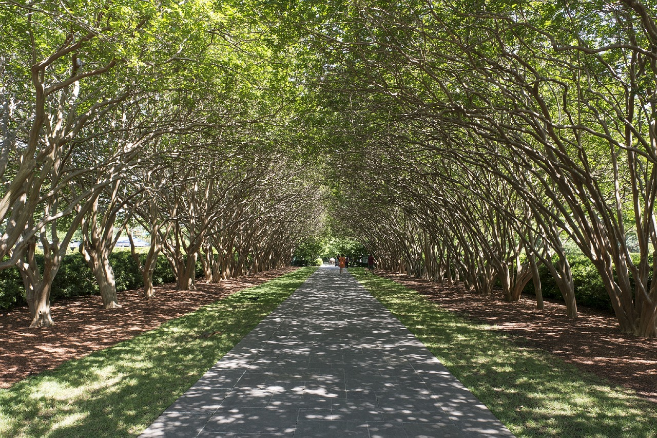 Tree-lined avenue at the Dallas Arboretum in East Dallas