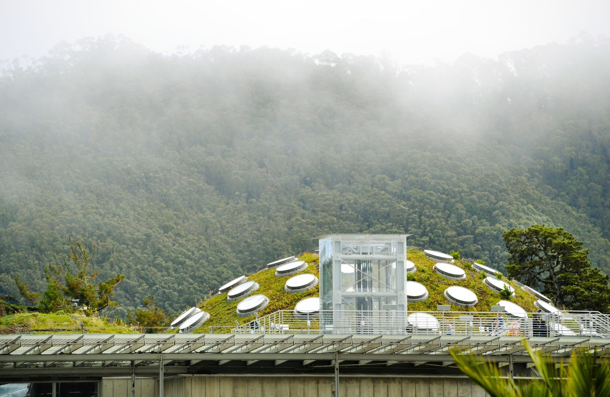 green roof at California Academy of Sciences in Golden Gate Park
