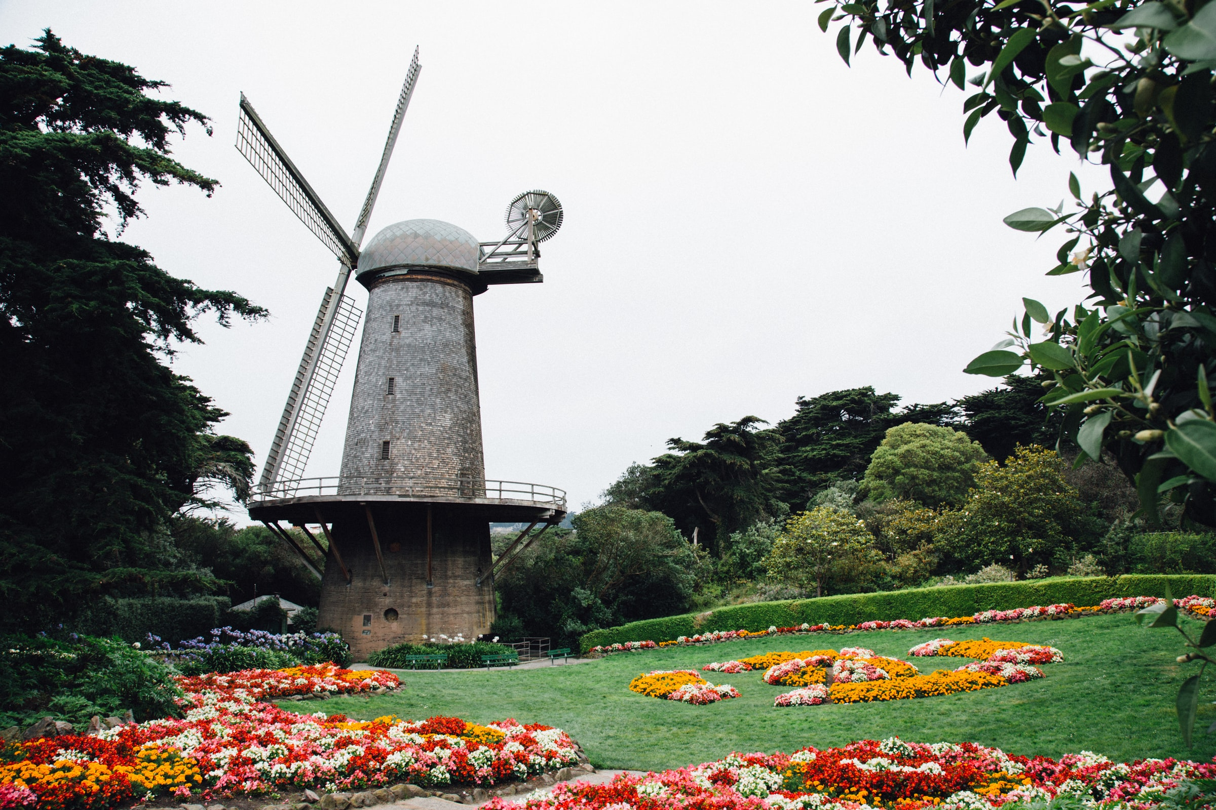 The Dutch Windmill above a tulip garden at the far end of Golden Gate Park