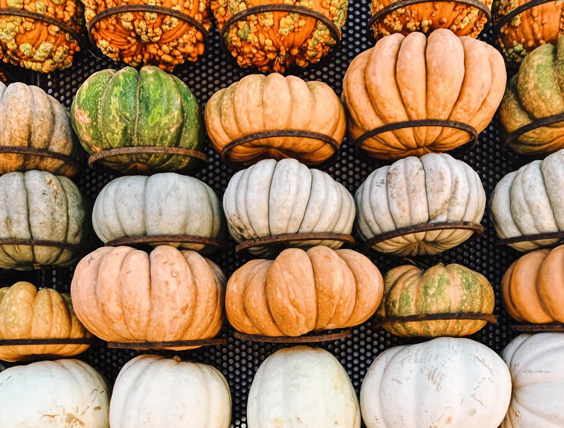 gourds at the Dallas arboretum fall festival