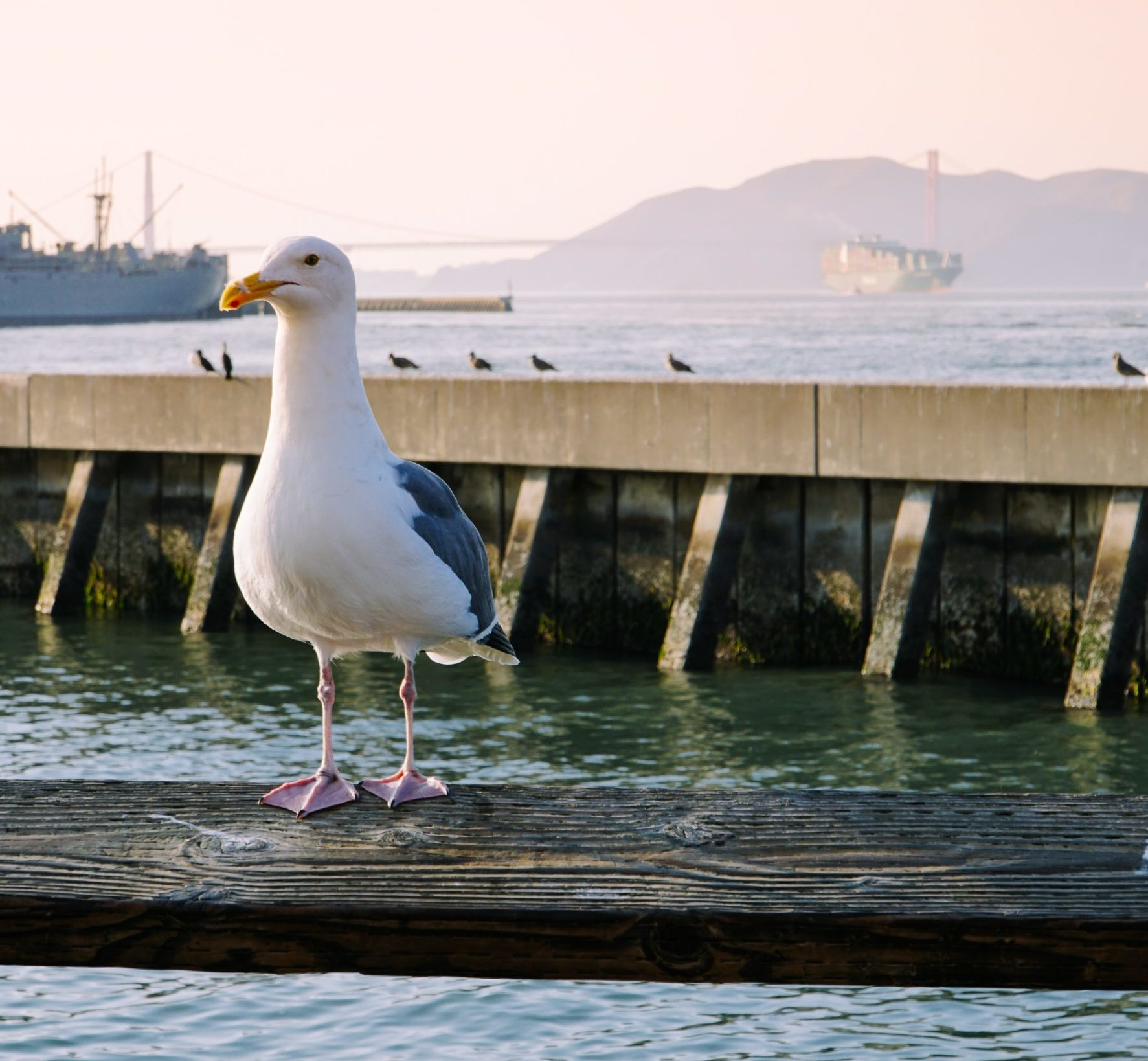 bird perched on Pier 39 in San Francisco
