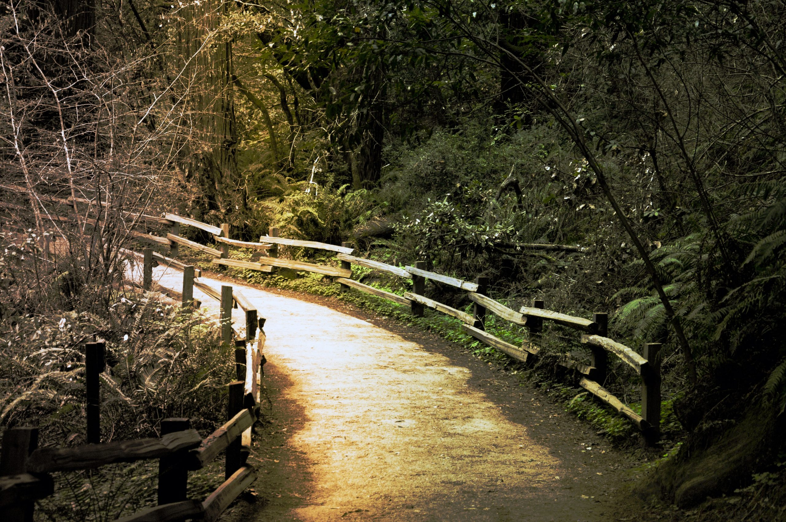 Hiking trail in Muir Woods