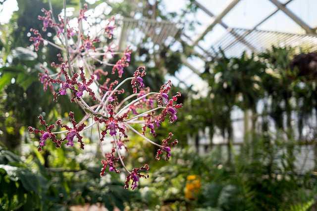 new york indoor gardens