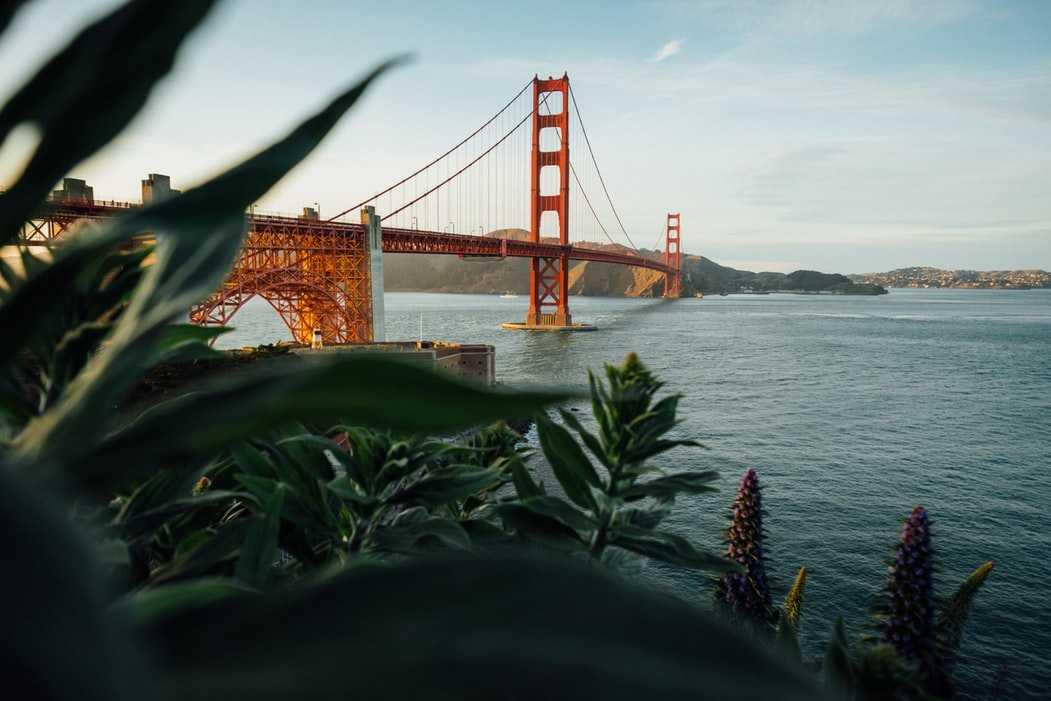 golden gate bridge with foliage in front