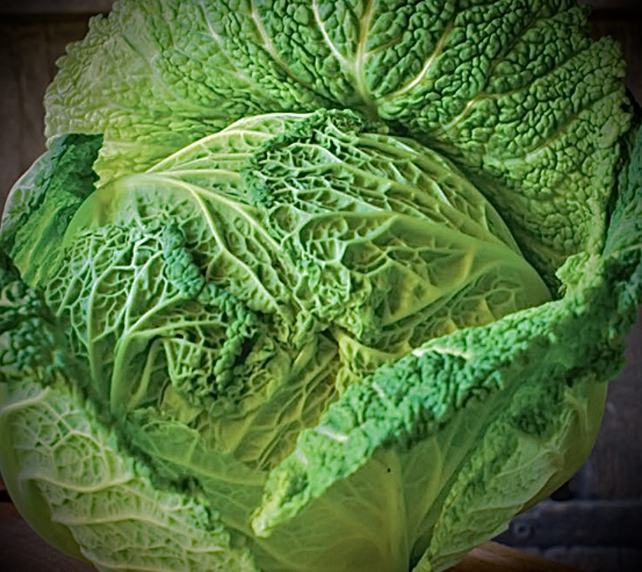 Head of French green cabbage