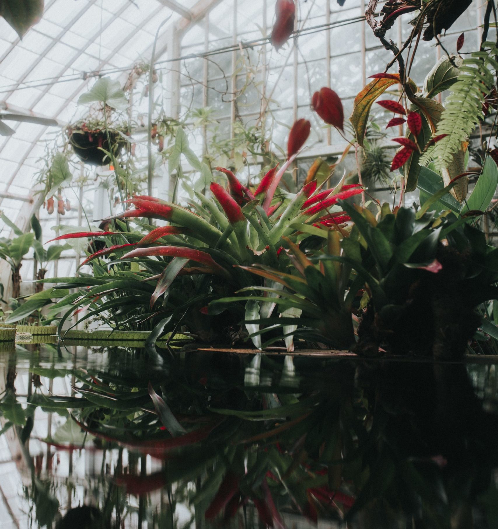 Another view of the Conservatory at Golden Gate Park